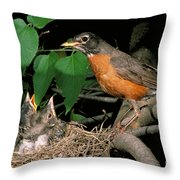 American Robin Feeding Its Young Throw Pillow