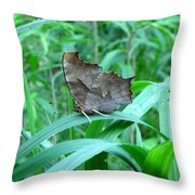 American Snout Butterfly Throw Pillow