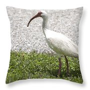 American White Ibis Poster Look Throw Pillow