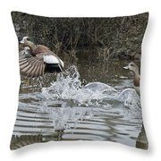 American Wigeon Pair Throw Pillow