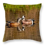 American Wigeon Pair Together Throw Pillow