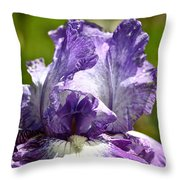 Amethyst Iris Throw Pillow