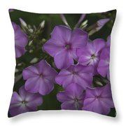 Amethyst Phlox Throw Pillow