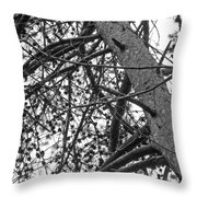 Amidst The Pines Is The Barrens Throw Pillow