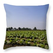 Amish Tobacco Fields Throw Pillow
