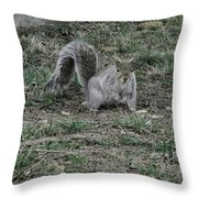 Gray Squirrel Among The Pine Cones Throw Pillow