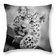 Amur Leopard Cub Portrait Throw Pillow