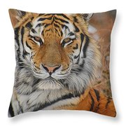 Amur Tiger Magnificence Throw Pillow