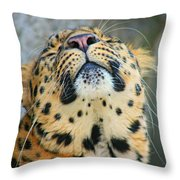 Amure Leopard Throw Pillow