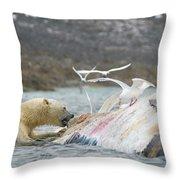 An Adult Polar Bear Ursus Maritimus Throw Pillow