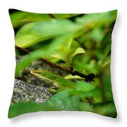An Angry Anole Throw Pillow