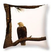 An Eagle Day Dreaming Throw Pillow
