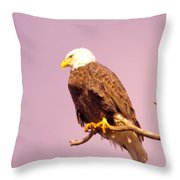 An Eagle Hanging Out Throw Pillow
