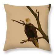 An Eagle In An Old Snag Throw Pillow