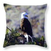 An Eagle In The Sun Throw Pillow