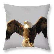 An Eagle Posing  Throw Pillow