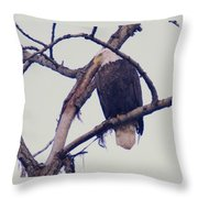 An Eagle Resting  Throw Pillow