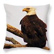 An Eagle's Perch Throw Pillow