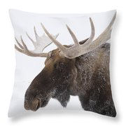 An Elk Cervus Canadensis With Snow Throw Pillow