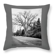 An Elm Tree At The Side Of A Road Throw Pillow
