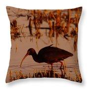 An Ibis Feeding Throw Pillow