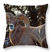 An Icy Stare Throw Pillow