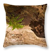 An Isolated Moss Plant Throw Pillow