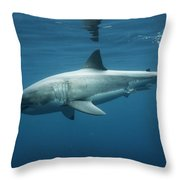 An Underwater Profile View Of A White Throw Pillow
