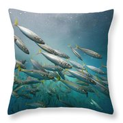 An Underwater View Of Schooling Fish Throw Pillow