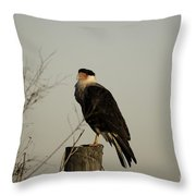 Anahuac Caracara Throw Pillow