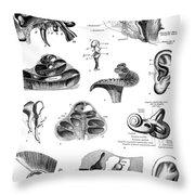 Anatomy: Human Ear Throw Pillow