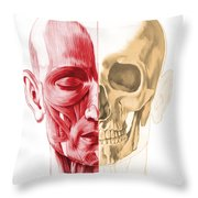 Anatomy Of A Male Human Head, With Half Throw Pillow by Leonello Calvetti