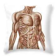 Anatomy Of Human Abdominal Muscles Throw Pillow
