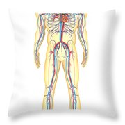Anatomy Of Human Body And Circulatory Throw Pillow by Stocktrek Images