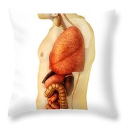 Anatomy Of Human Body Showing Whole Throw Pillow by Stocktrek Images
