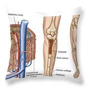 Anatomy Of Human Bone Marrow Throw Pillow