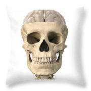 Anatomy Of Human Skull, Cutaway View Throw Pillow