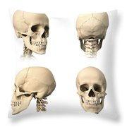 Anatomy Of Human Skull From Different Throw Pillow by Leonello Calvetti