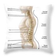 Anatomy Of Human Vertebral Column, Left Throw Pillow