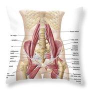 Anatomy Of Iliopsoa, Also Known Throw Pillow