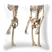 Anatomy Of Male Human Skeleton, Side Throw Pillow