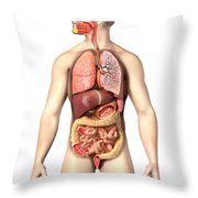 Anatomy Of Male Respiratory Throw Pillow
