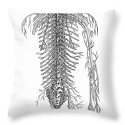 Anatomy: Spinal Nerves Throw Pillow