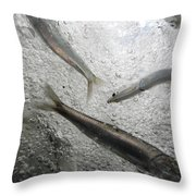 Anchovies,engraulis Moradx, Swim Throw Pillow