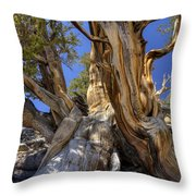 Ancient Bristlecone Throw Pillow