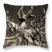 Ancient Bristlecone Pine In Black And White Throw Pillow