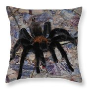 And Along Came A Little Spider .  Throw Pillow