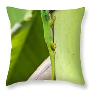 Andaman Day Gecko  India Throw Pillow