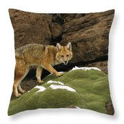 Andean Red Fox Altiplano Bolivia Throw Pillow