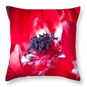Anemone Coronaria Throw Pillow